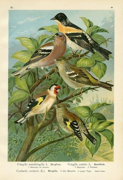 Birds BN1 - Framed Artwork from Interior Elements, Eagle WI