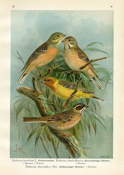 Birds BN2 - Framed Artwork from Interior Elements, Eagle WI