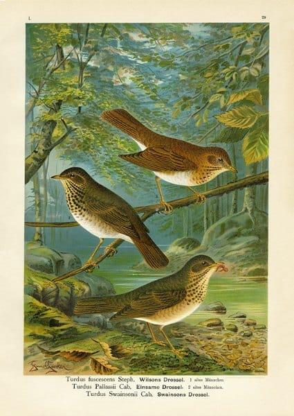 Birds BN3 - Framed Artwork from Interior Elements, Eagle WI