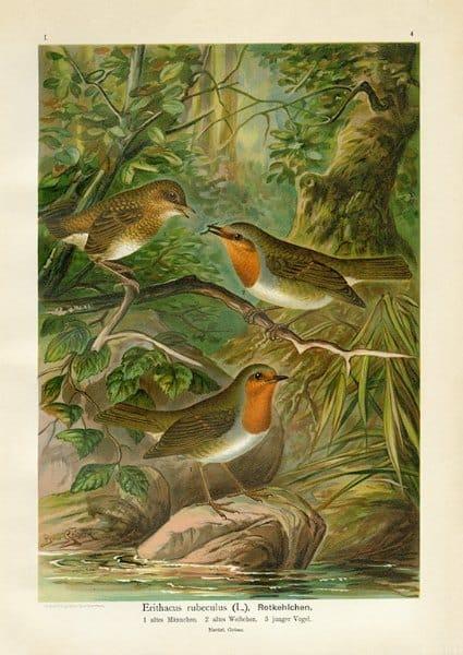 Birds BN4 - Framed Artwork from Interior Elements, Eagle WI
