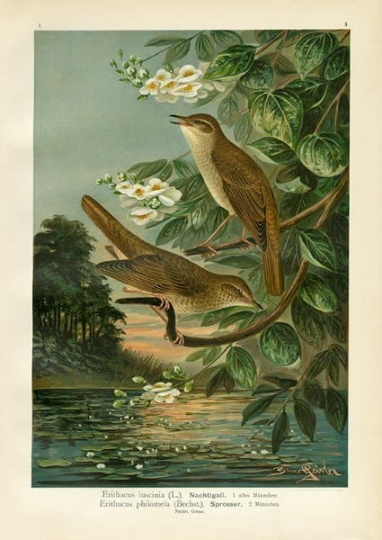 Birds BN5 - Framed Artwork from Interior Elements, Eagle WI