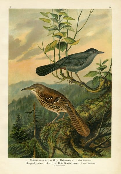 Birds BN6 - Framed Artwork from Interior Elements, Eagle WI