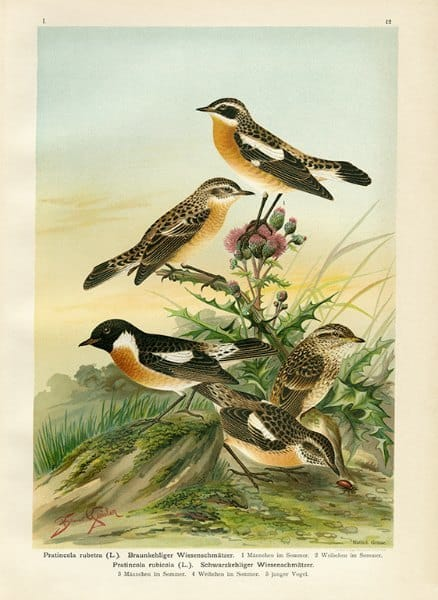 Birds BN7 - Framed Artwork from Interior Elements, Eagle WI