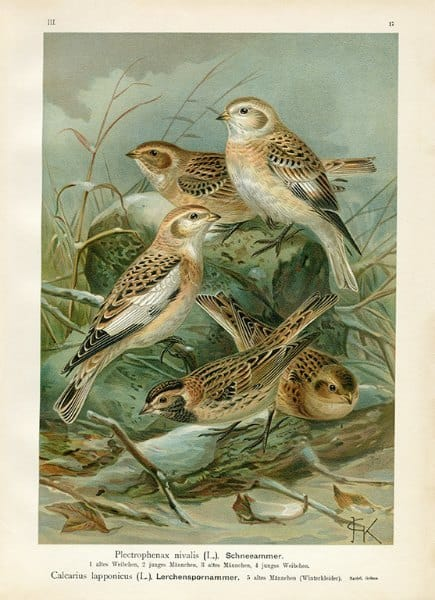 Birds BN8 - Framed Artwork from Interior Elements, Eagle WI