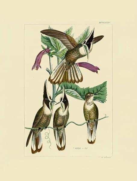 Birds Hummingbird BHB1 - Framed Artwork from Interior Elements, Eagle WI