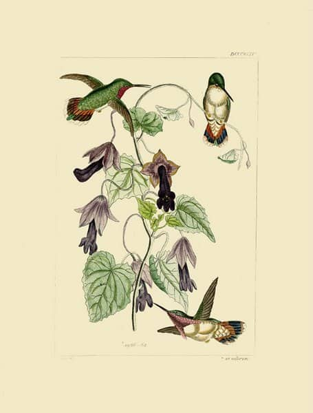 Birds Hummingbird BHB10 - Framed Artwork from Interior Elements, Eagle WI