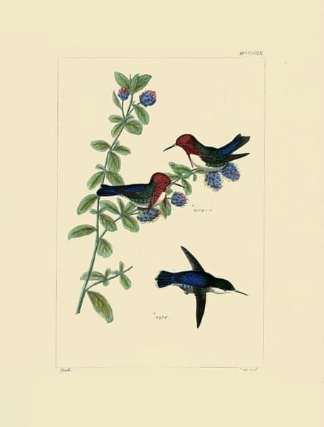Birds Hummingbird BHB2 - Framed Artwork from Interior Elements, Eagle WI
