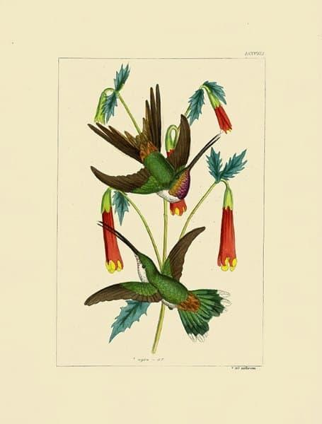 Birds Hummingbird BHB3 - Framed Artwork from Interior Elements, Eagle WI