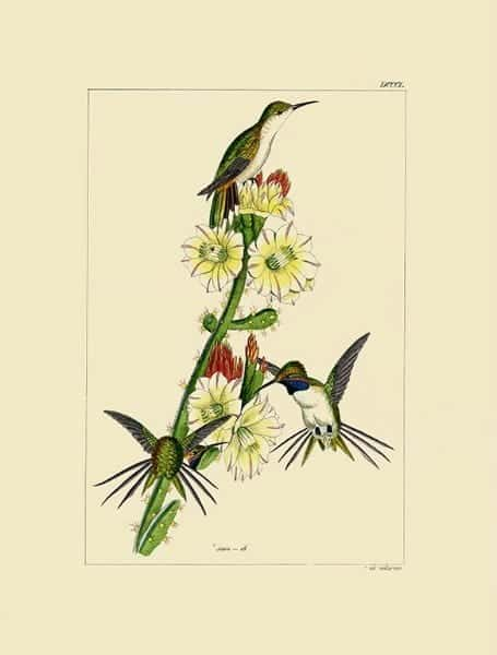 Birds Hummingbird BHB4 - Framed Artwork from Interior Elements, Eagle WI