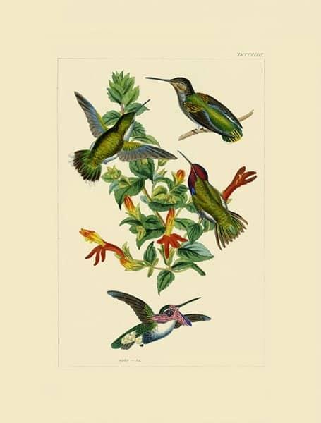 Birds Hummingbird BHB5 - Framed Artwork from Interior Elements, Eagle WI
