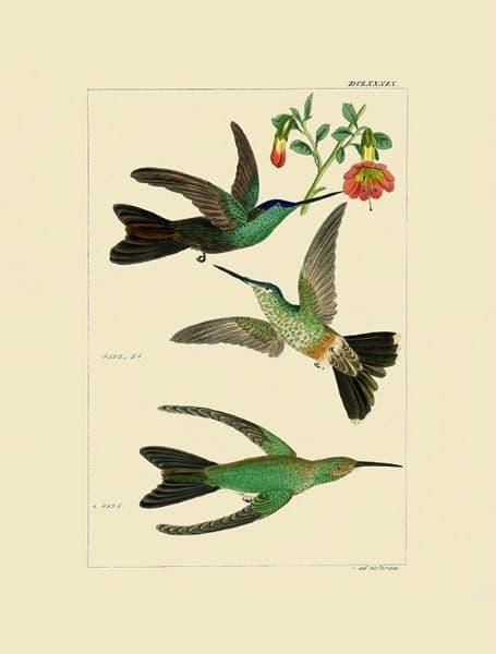 Birds Hummingbird BHB6 - Framed Artwork from Interior Elements, Eagle WI