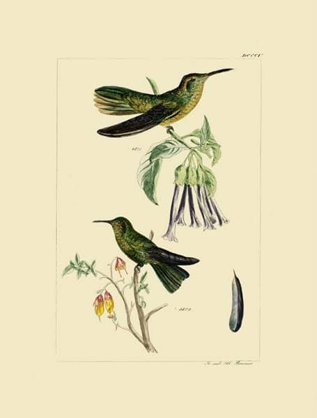 Birds Hummingbird BHB7 - Framed Artwork from Interior Elements, Eagle WI