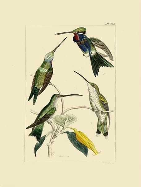 Birds Hummingbird BHB8 - Framed Artwork from Interior Elements, Eagle WI