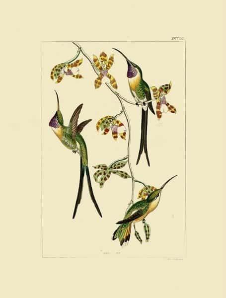 Birds Hummingbird BHB9 - Framed Artwork from Interior Elements, Eagle WI