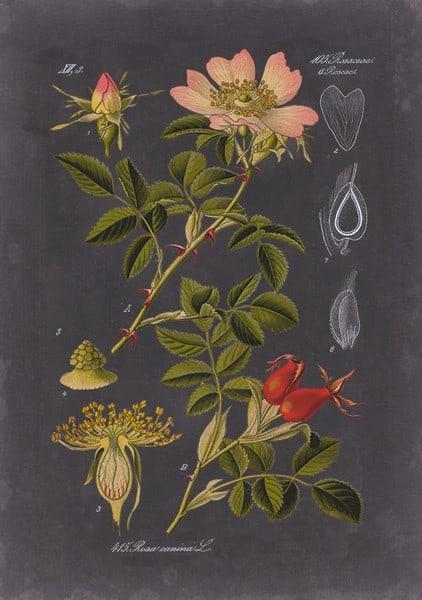 Black Botanical SSBB1 - Framed Artwork from Interior Elements, Eagle WI