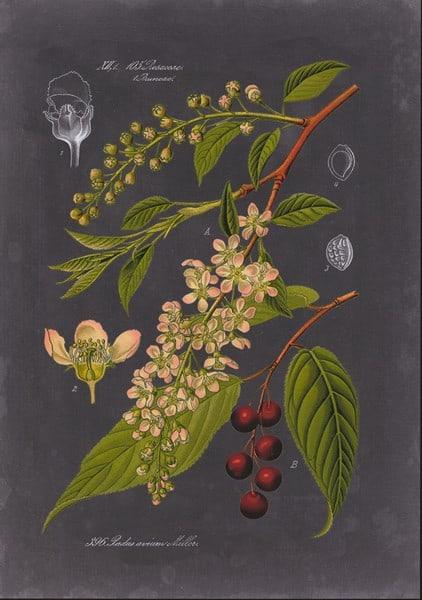 Black Botanical SSBB2 - Framed Artwork from Interior Elements, Eagle WI