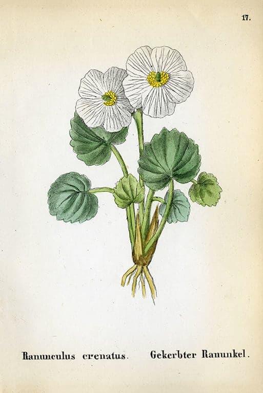 Alpine Flowers BotAF1 - Framed Artwork from Interior Elements, Eagle WI