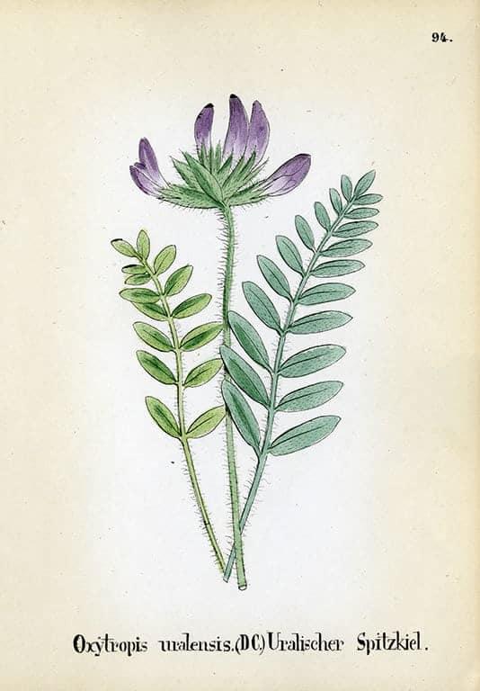 Alpine Flowers BotAF10 - Framed Artwork from Interior Elements, Eagle WI