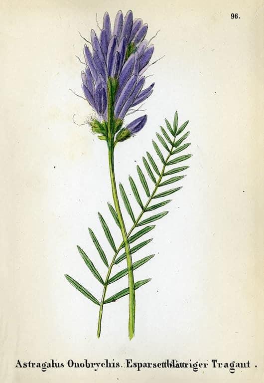 Alpine Flowers BotAF11 - Framed Artwork from Interior Elements, Eagle WI