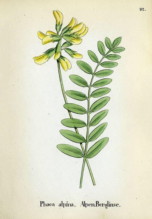 Alpine Flowers BotAF12 - Framed Artwork from Interior Elements, Eagle WI