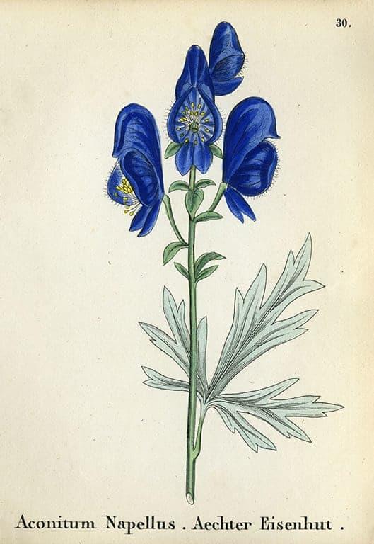 Alpine Flowers BotAF13 - Framed Artwork from Interior Elements, Eagle WI