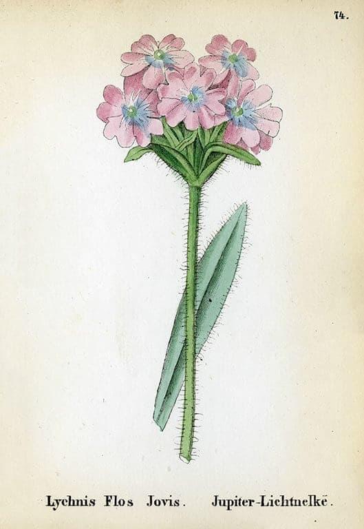 Alpine Flowers BotAF14 - Framed Artwork from Interior Elements, Eagle WI