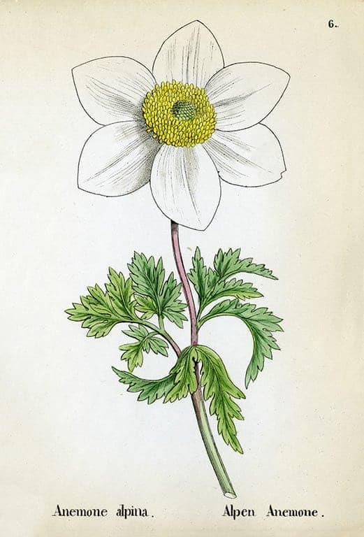 Alpine Flowers BotAF15 - Framed Artwork from Interior Elements, Eagle WI