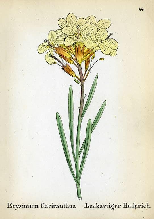 Alpine Flowers BotAF17 - Framed Artwork from Interior Elements, Eagle WI