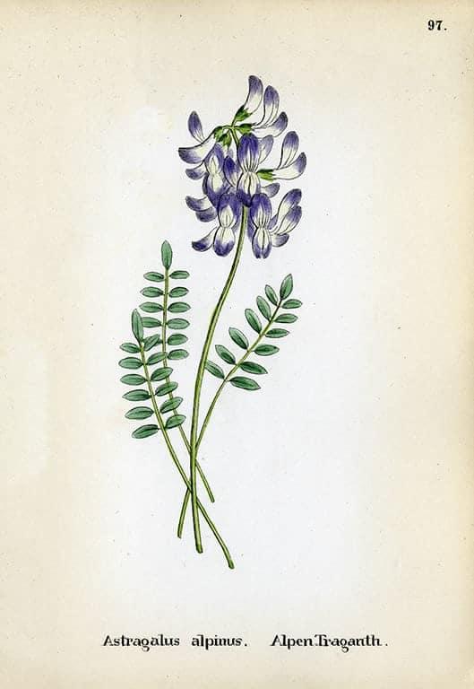 Alpine Flowers BotAF18 - Framed Artwork from Interior Elements, Eagle WI