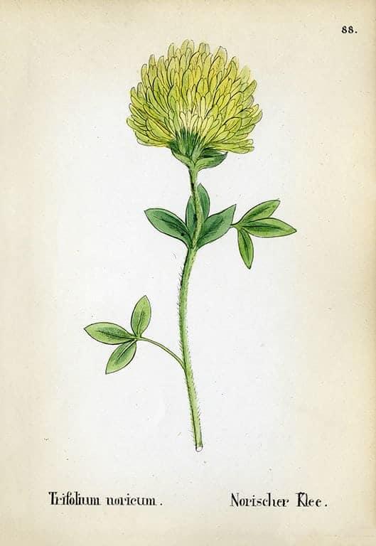 Alpine Flowers BotAF19 - Framed Artwork from Interior Elements, Eagle WI
