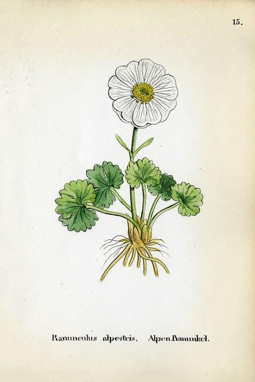Alpine Flowers BotAF2 - Framed Artwork from Interior Elements, Eagle WI