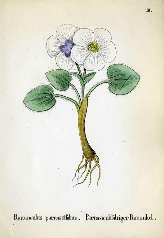 Alpine Flowers BotAF21 - Framed Artwork from Interior Elements, Eagle WI