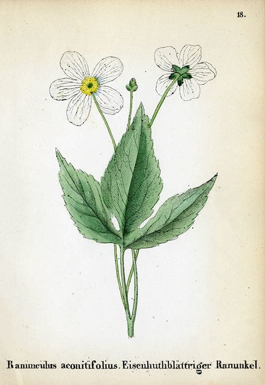Alpine Flowers BotAF24 - Framed Artwork from Interior Elements, Eagle WI