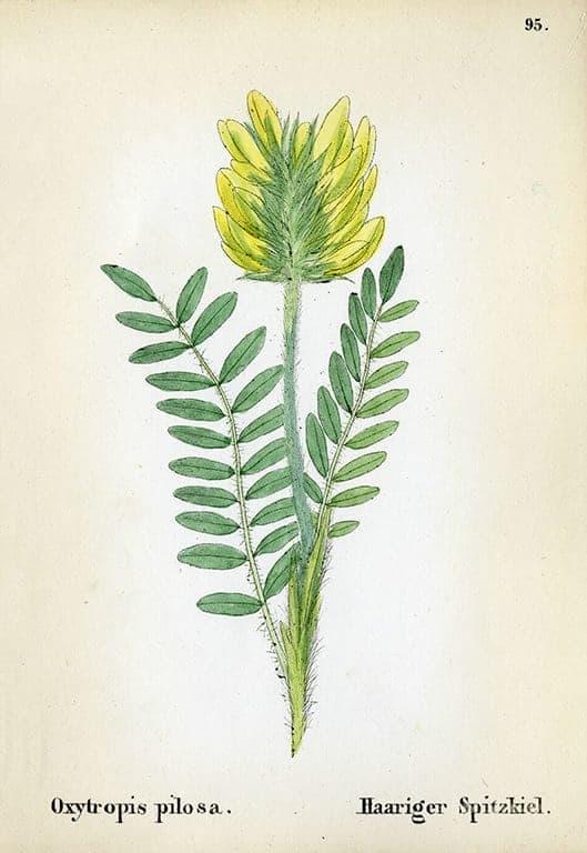 Alpine Flowers BotAF25 - Framed Artwork from Interior Elements, Eagle WI