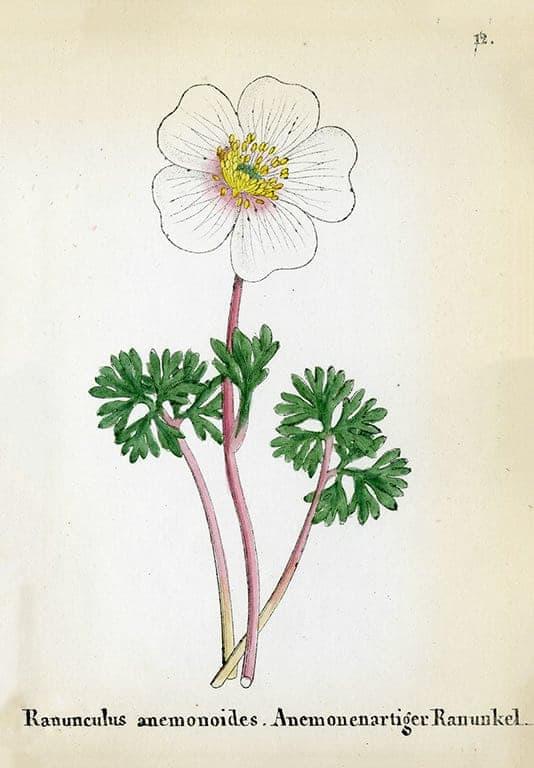 Alpine Flowers BotAF3 - Framed Artwork from Interior Elements, Eagle WI