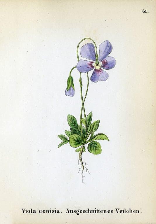 Alpine Flowers BotAF4 - Framed Artwork from Interior Elements, Eagle WI