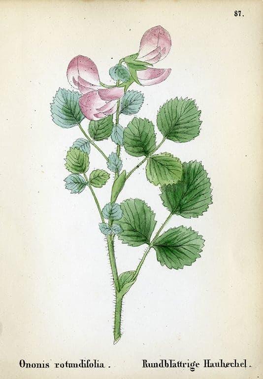 Alpine Flowers BotAF5 - Framed Artwork from Interior Elements, Eagle WI