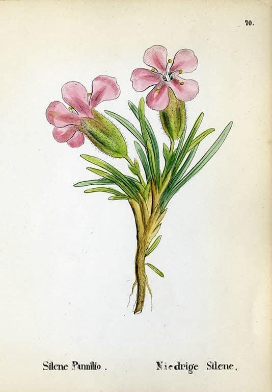 Alpine Flowers BotAF6 - Framed Artwork from Interior Elements, Eagle WI