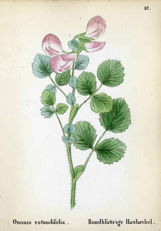 Alpine Flowers BotAF7 - Framed Artwork from Interior Elements, Eagle WI