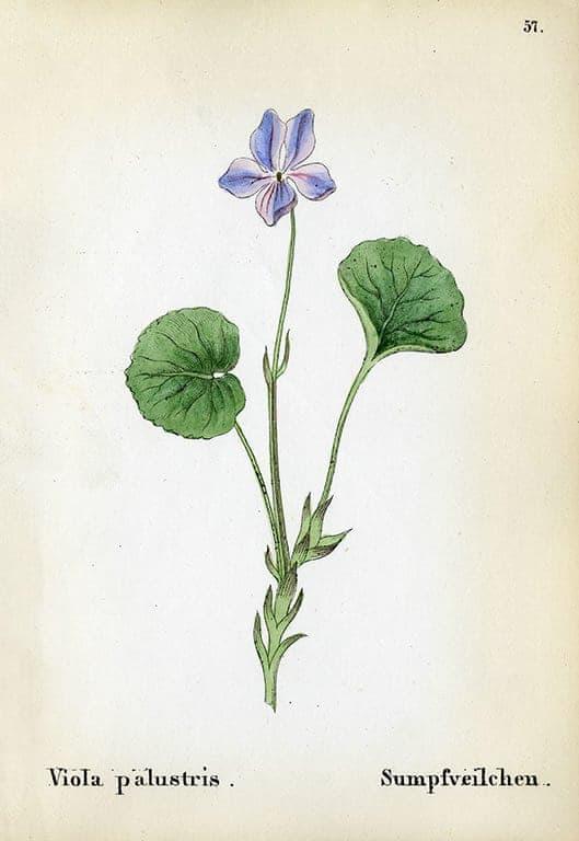 Alpine Flowers BotAF8 - Framed Artwork from Interior Elements, Eagle WI