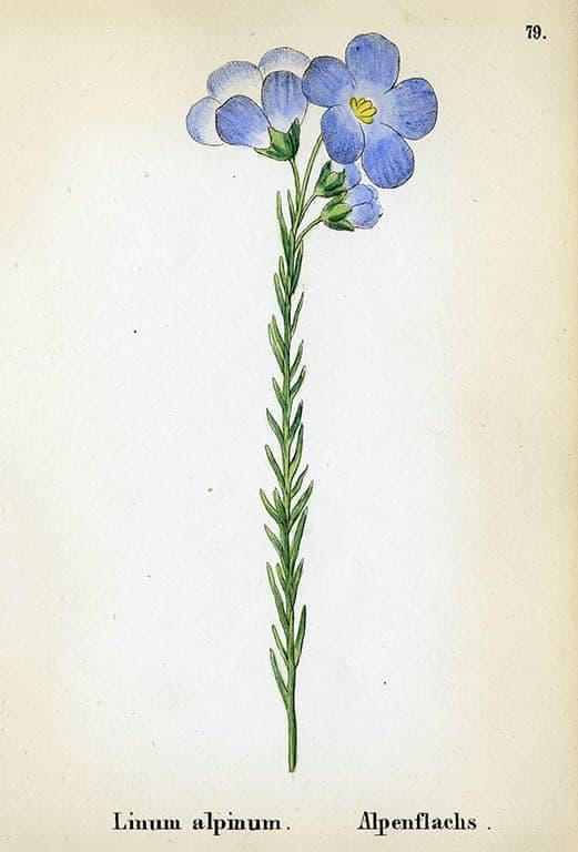 Alpine Flowers BotAF9 - Framed Artwork from Interior Elements, Eagle WI