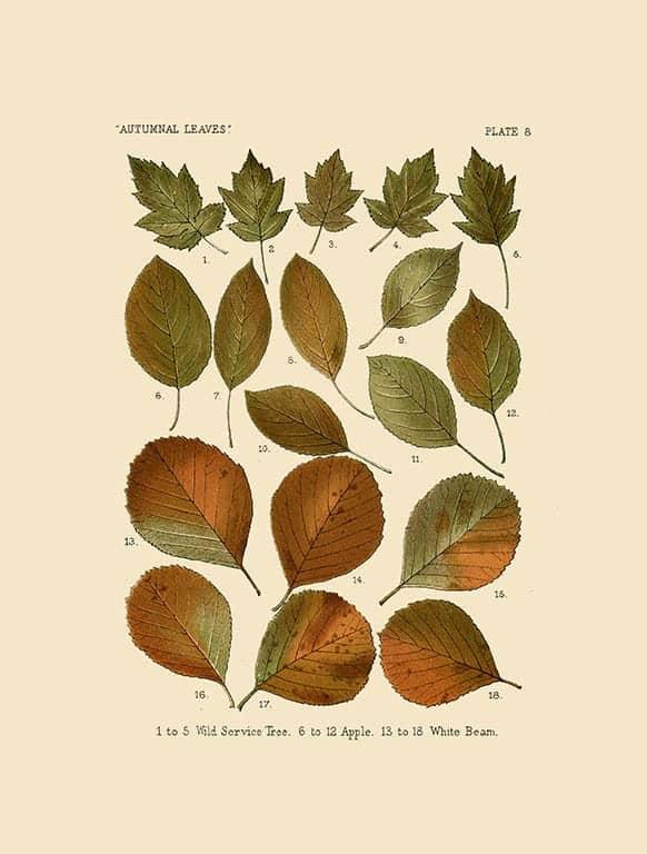 Autumn Leaves BotAL10 - Framed Artwork from Interior Elements, Eagle WI