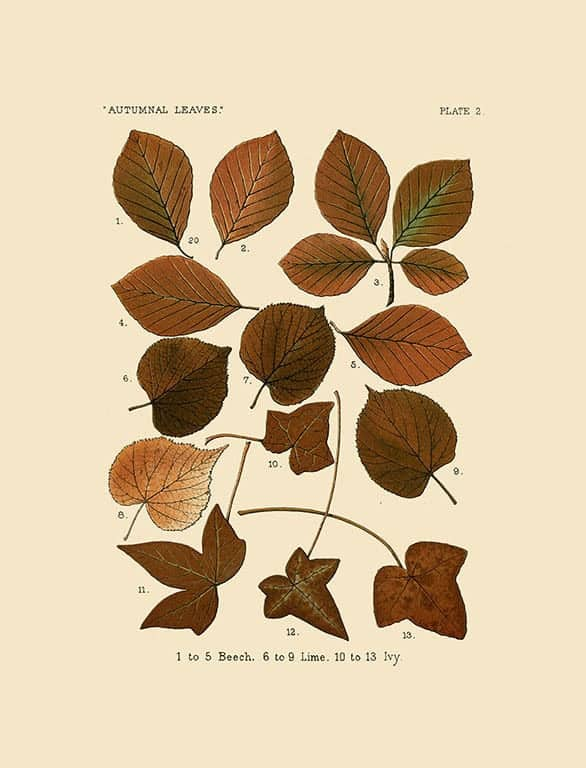 Autumn Leaves BotAL11 - Framed Artwork from Interior Elements, Eagle WI