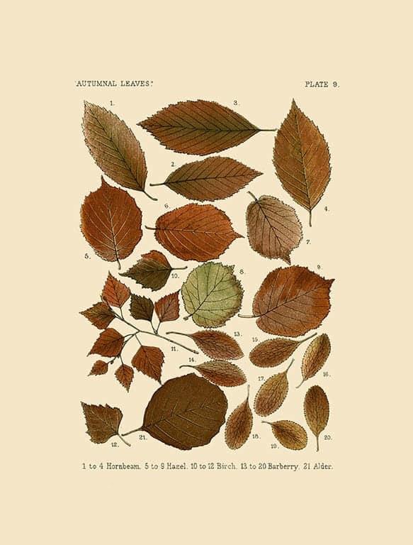 Autumn Leaves BotAL12 - Framed Artwork from Interior Elements, Eagle WI
