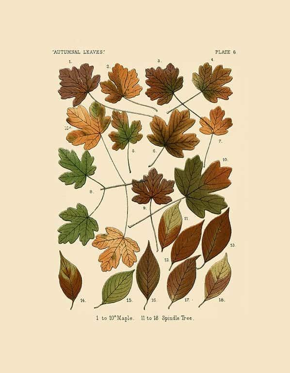 Autumn Leaves BotAL2 - Framed Artwork from Interior Elements, Eagle WI