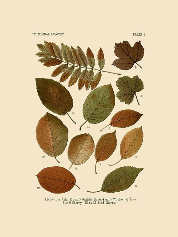 Autumn Leaves BotAL4 - Framed Artwork from Interior Elements, Eagle WI