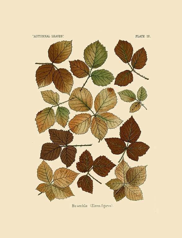 Autumn Leaves BotAL6 - Framed Artwork from Interior Elements, Eagle WI