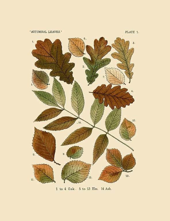 Autumn Leaves BotAL7 - Framed Artwork from Interior Elements, Eagle WI
