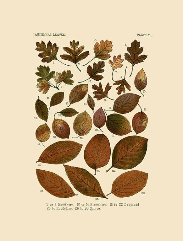 Autumn Leaves BotAL8 - Framed Artwork from Interior Elements, Eagle WI