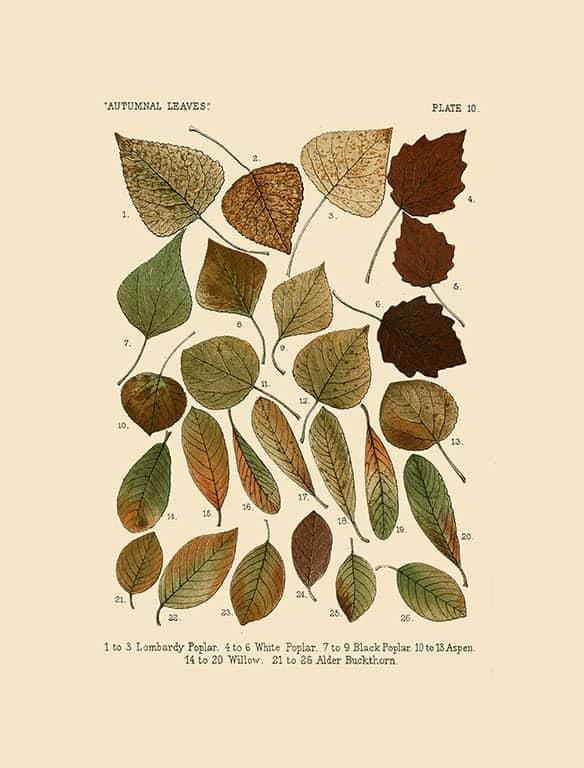 Autumn Leaves BotAL9 - Framed Artwork from Interior Elements, Eagle WI